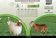 أسعار الأضاحي في الوطنية الزراعية نعيمي وسواكني